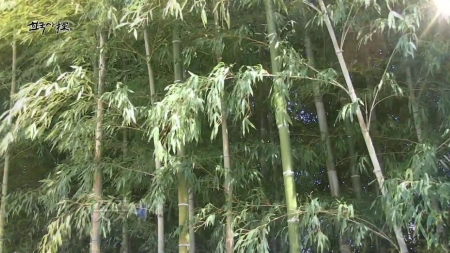 선조들의 삶과 함께한 대나무