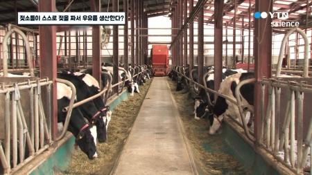젖소들이 스스로 젖을 짜서 우유를 생산한다?