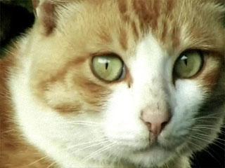 섬으로 간 고양이 거문도