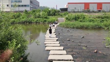 하천, 도시 생태의 보고