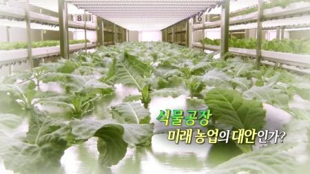 식물공장, 미래 농업의 대안인가?