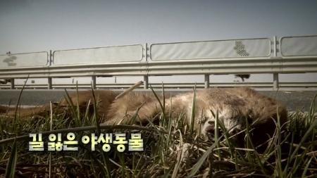 길 잃은 야생동물