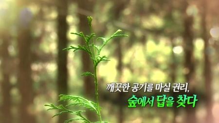 깨끗한 공기를 마실 권리, 숲에서 답을 찾다