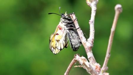 사라지는 곤충들