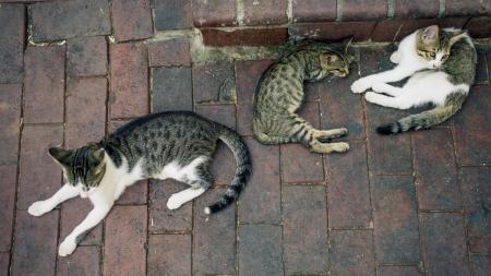 길 위의 작은 이웃, 길고양이