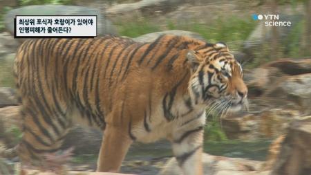 최상위 포식자, 호랑이가 있어야 인명피해가 줄어든다?