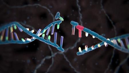 정교해진 유전자 가위…DNA '한 가닥' 교체