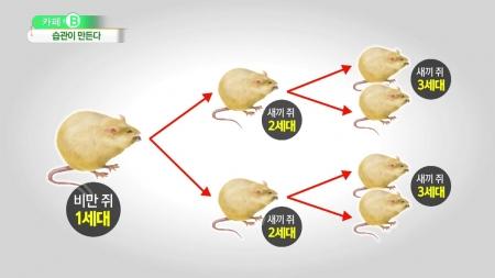 [카페 B] 비만 대물림…유전자 꼬리표