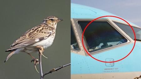항공기에 가장 많이 부딪히는 새는 '종다리'