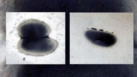 간·신장 독성유발 물질 '피렌' 잡는 세균 2종 발견