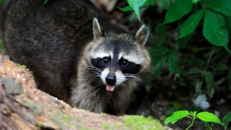 생태계 위협하는 두 얼굴의 동물들