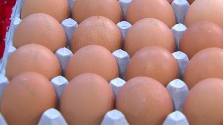고창 AI로 '달걀 대란' 또 오나…제빵·외식업계도 긴장