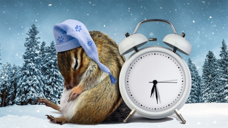 겨울을 나는 지혜…동물들의 겨울잠