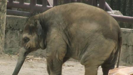 호랑이부터 코끼리까지…사라지는 우리 동물