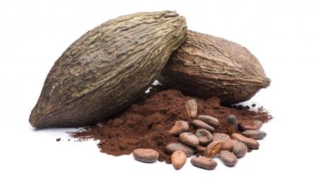 초콜릿 구원 나선 '유전자 가위'…GMO 대체하나?