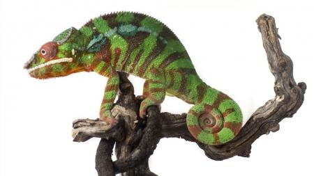 뱀부터 카멜레온까지…특수동물의 세계
