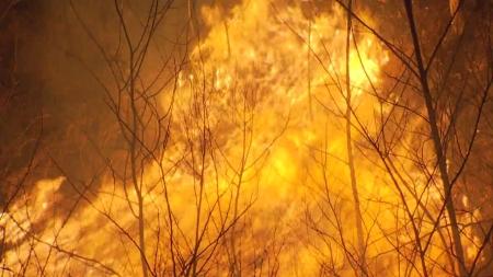 산불 가해자 징역·벌금 등 강력 처벌