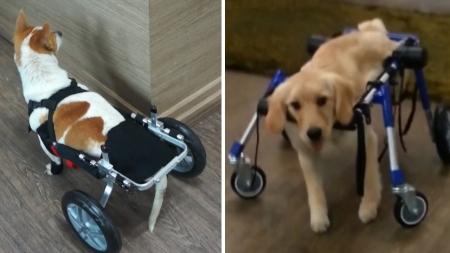 장애 동물에게 희망을…동물재활공학사