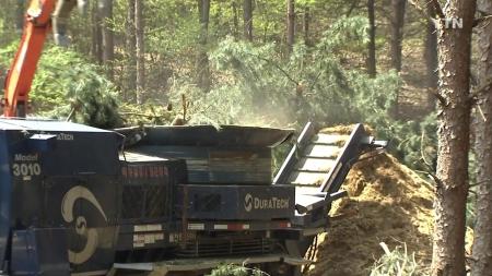 재선충병 전국 확산, 고통받은 '산림'...재발생률 낮춰야