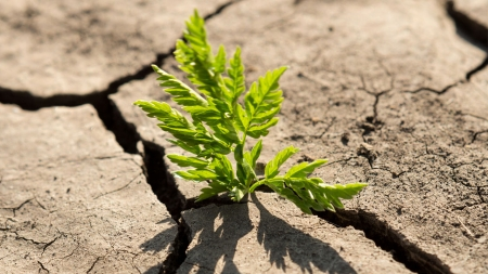 소리없는 전쟁…식물들의 생존 방법은?