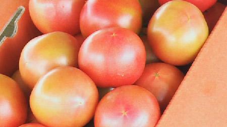 [과학향기] 태양의 맛, 토마토의 모든 것!