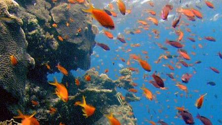 대산호초 1부. 자연의 놀라운 기적