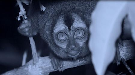 야행성 동물의 세계 1부