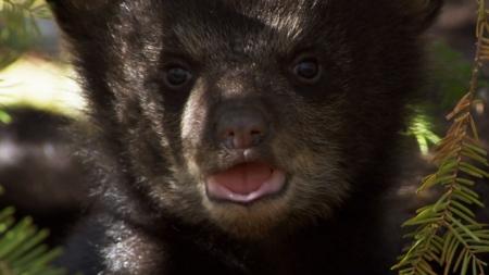 BBC특선_24/7와일드_1부 곰 세 마리 이야기