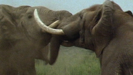 와일드 랭킹 4부. 고약한 냄새를 풍기는 동물 TOP 10