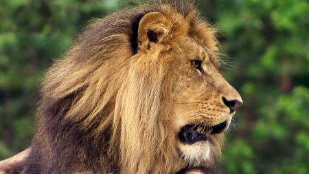[이지사이언스] 최고를 찾아라, 길찾기의 고수, 동물들의 생존 전략