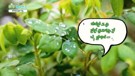 [이지사이언스] 뿌리와 잎의 기능, 식충식물, 기능성식물