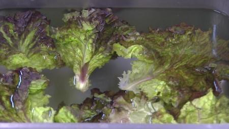 [톡 쏘는 과학 사이다] 시든 채소를 살리는 신통방통한 물의 정체는?