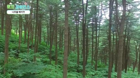 [이지 사이언스] 나무를 베자?!/ 폐목재에서 친환경 연료로 / 드론, 뜨겁게 날다