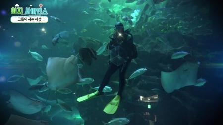 [이지 사이언스] 안녕, 물고기야!