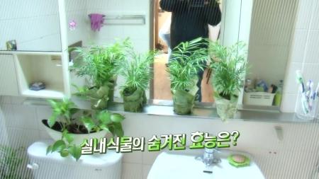 봄철 집안 건강 지킴이! 식물의 재발견!