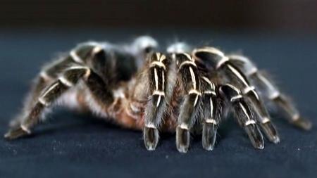 우리가 몰랐던 거미이야기 - 주필거미박물관