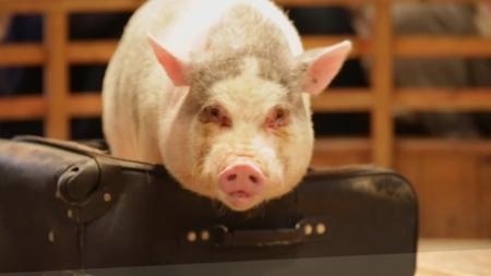 돼지와의 만남 - 돼지박물관